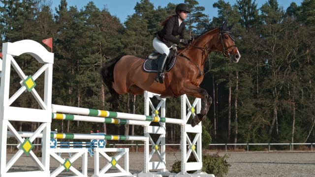 SPEED RAMP Horse and his rider jumping an oxer in sunshine