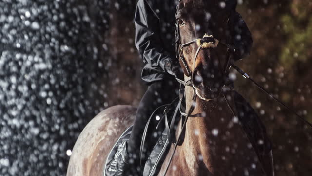 slo mo horse and rider by a water fountain - bridle stock videos & royalty-free footage