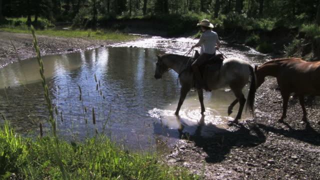 Caballo y rider cruce una corriente