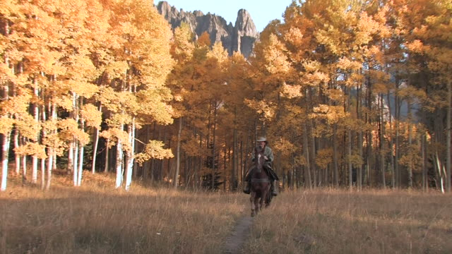 vídeos y material grabado en eventos de stock de ms zo horse and rider passing through yellow aspen grove / telluride, colorado, united state - animales de trabajo