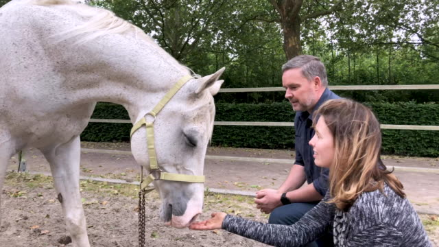 horse assisted coaching session - working animal stock videos & royalty-free footage