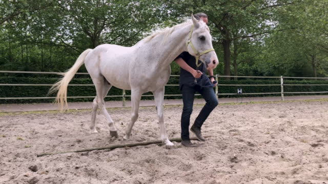 horse assisted coaching session - briglia video stock e b–roll