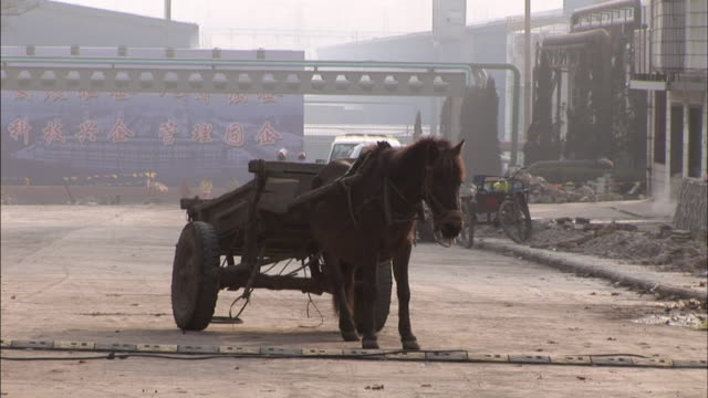 ws horse attached to cart still as truck drives past in background/ guiyang, china - horse cart stock videos and b-roll footage