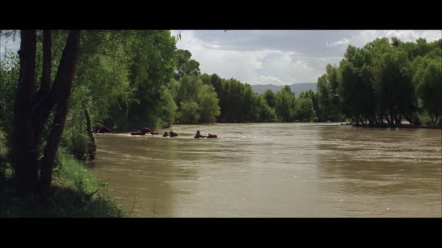 ws pan horse back riders crossing river, struggling in water - four people stock videos & royalty-free footage