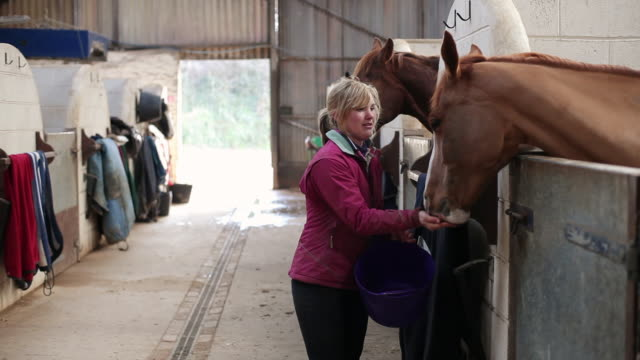 ms horse being fed by stable hand / helland, bodmin, cornwall, united kingdom - stable stock videos & royalty-free footage