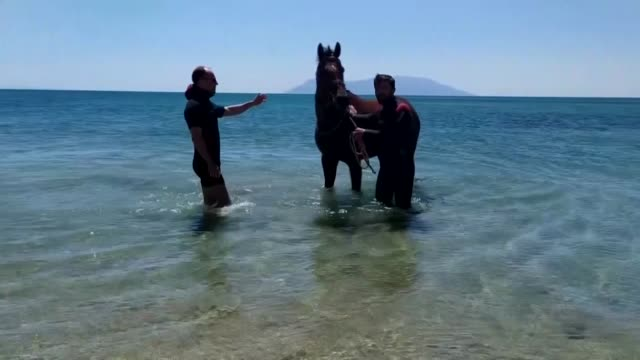 horse breeders in turkey train and prepare their racehorses in the gulf of saros in the northwestern province of edirne the horses brought by their... - mating stock videos & royalty-free footage