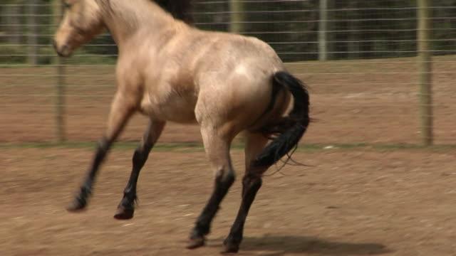 horse bucking - bucking stock videos & royalty-free footage