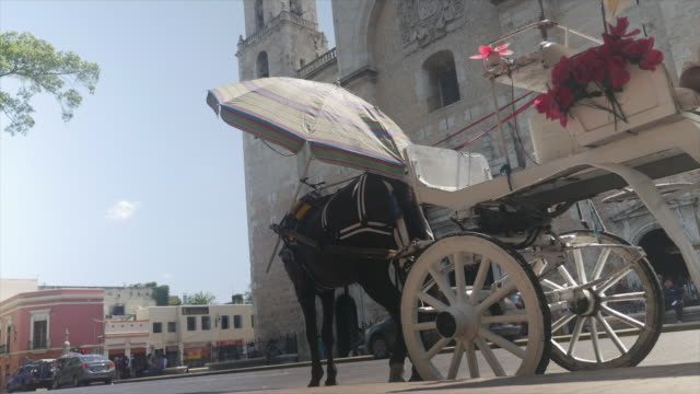 vídeos de stock, filmes e b-roll de horse carriage and traffic in front of the cathedral of merida - mérida yucatán