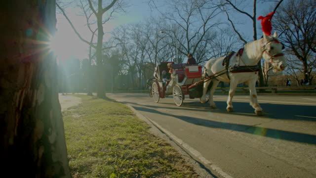 stockvideo's en b-roll-footage met paardenkoets in central park new york city zonlicht flare - koets