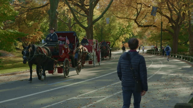 horse carriage in central park new york city - natural parkland stock videos & royalty-free footage