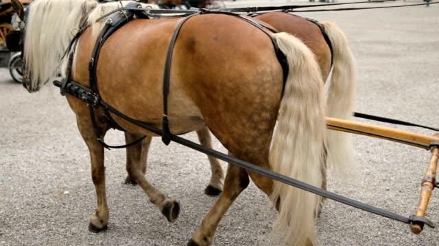 pferdekutsche in salzburg, österreich - braun stock-videos und b-roll-filmmaterial