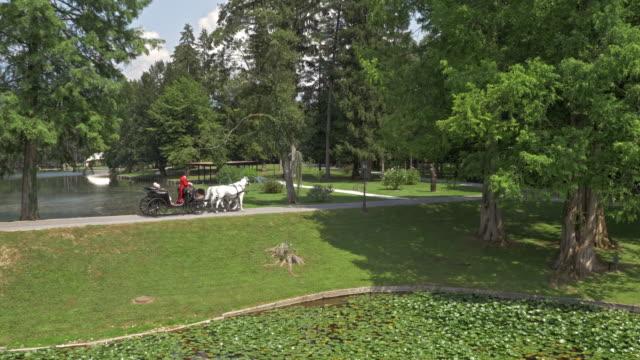 stockvideo's en b-roll-footage met luchtfoto paard en wagen rijden langs een meer - paard en wagen