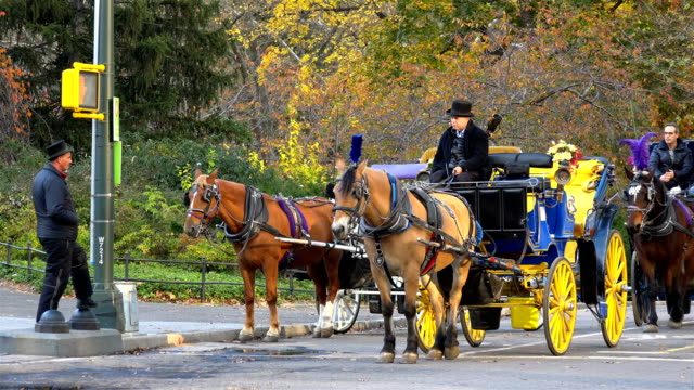 vídeos de stock, filmes e b-roll de horse carriage ride in central park resting during the autumn season – fall weather / central park, midtown - manhattan, new york city, usa. - animal de trabalho
