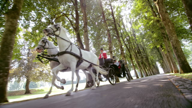 slo mo ts horse carriage ride through the park - two animals stock videos and b-roll footage
