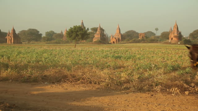 WS Horse carriage riding in front of ancient temples / Bagan, Myanmar