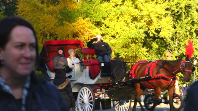 horse carriage run on the park road along the autumn color trees around the hot dog stand at central park new york ny usa on nov. 11 2018. - ginkgo stock videos & royalty-free footage