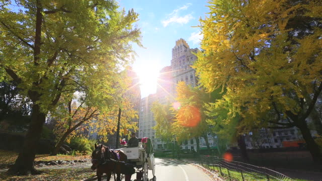 Horse carriage run the path which is surrounded by illuminated autumnal trees and structures by morning sun at Central Park.
