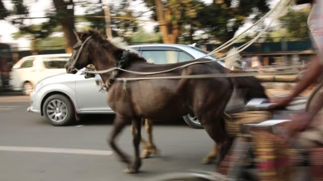 horse carriage seen on street in dhaka - un giorno nella vita video stock e b–roll
