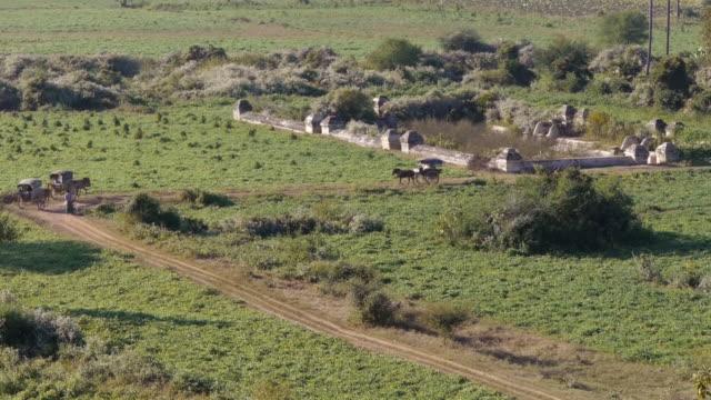 horse carriages in inwa, myanamar - 働く動物点の映像素材/bロール
