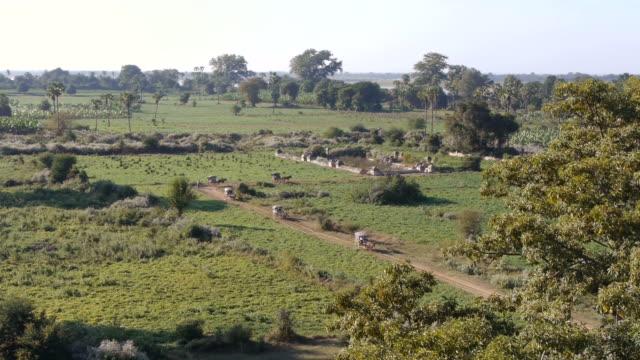 w/s horse carriages in inwa, myanamar - 働く動物点の映像素材/bロール