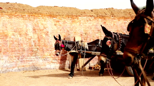 horse cart standing in a row - horse cart stock videos and b-roll footage