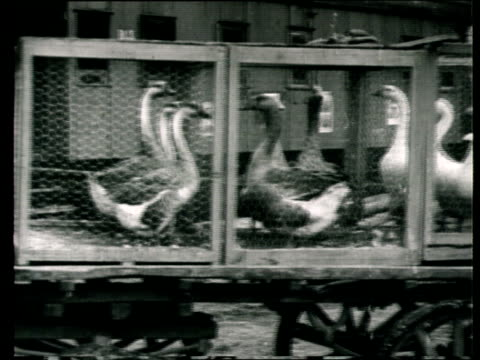 1923 montage b/w horse carts transporting geese in cages for the all-union agricultural exhibition/ moscow, russia - 1923 stock videos & royalty-free footage