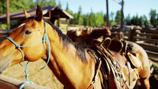 horse corralled on dude ranch american rockies usa - saddle stock videos & royalty-free footage