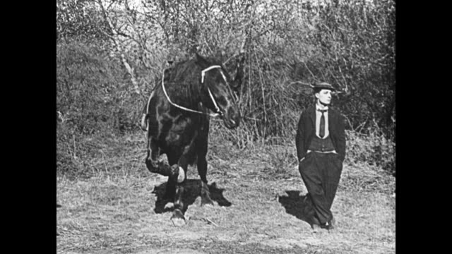 1921 a horse crosses its legs like man (buster keaton) - 1921 stock videos & royalty-free footage