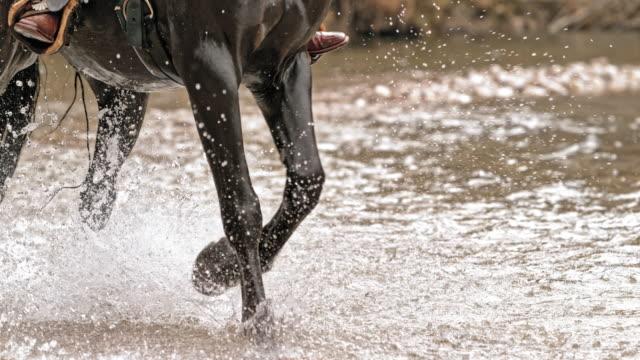 vídeos de stock, filmes e b-roll de slo mo ld cavalo atravessando um rio - cavalgar