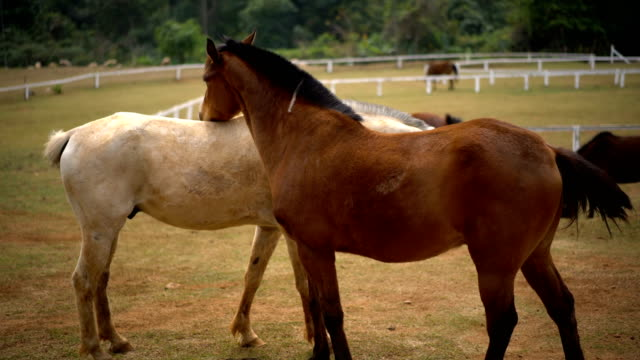 Pferd brechen andere mit Liebe.