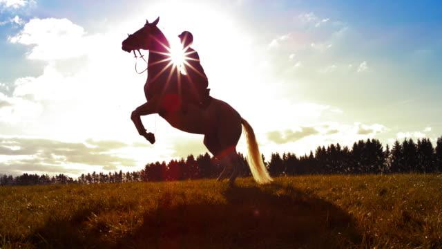 vídeos de stock, filmes e b-roll de cavalo do mo de slo que faz um pesade na luz do sol - montar um animal