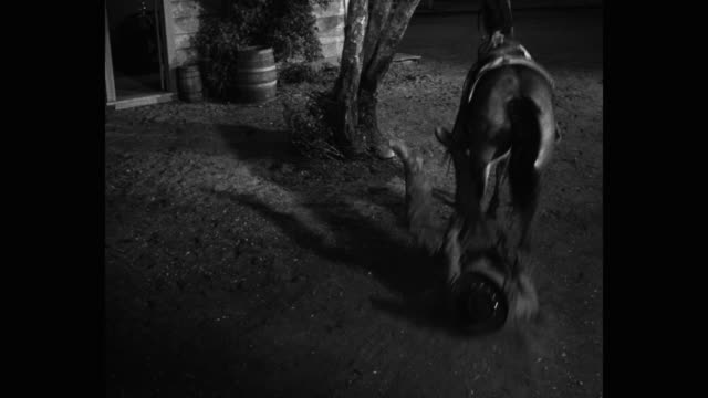 horse dragging man at night, western us - dragging stock videos & royalty-free footage