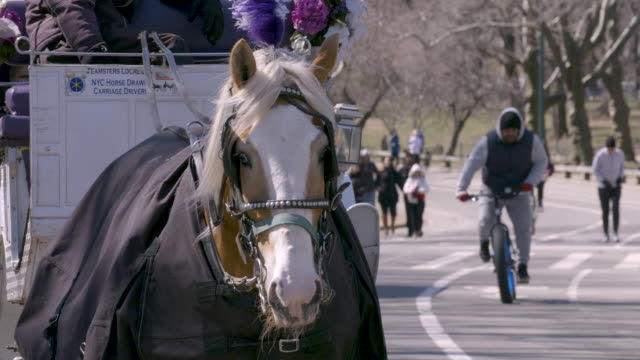 A horse drawn carriage canters through Central Park on a sunny winter day.