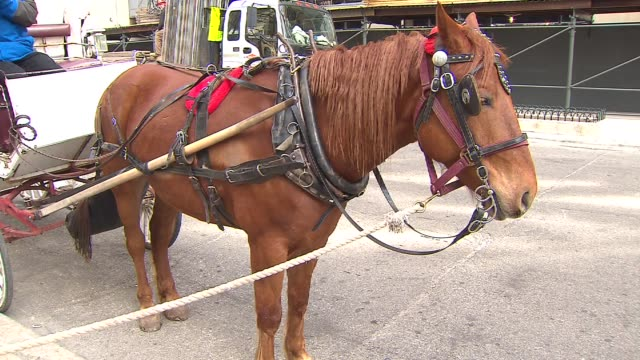 horse drawn carriage in downtown chicago during the day on april 02 2011 in chicago illinois - hooved animal stock videos & royalty-free footage