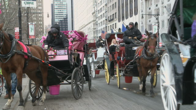 vidéos et rushes de ws horse drawn carriages moving in central park south / new york city, new york, usa - animaux au travail