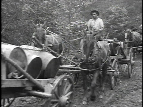 1923 reenactment horse drawn trailers hauling barrels of oil through bumpy fields / titusville, pennsylvania, united states  - 1923 stock-videos und b-roll-filmmaterial