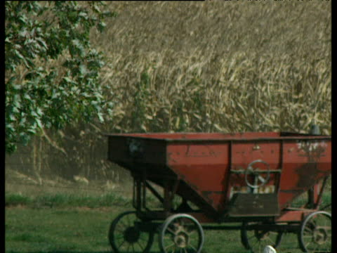 horse drawn wagons and harvesting machine driven by amish farmers are pulled along and driven across farm pennsylvania - amische stock-videos und b-roll-filmmaterial