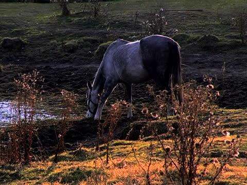 stockvideo's en b-roll-footage met horse drinking water - werkdier