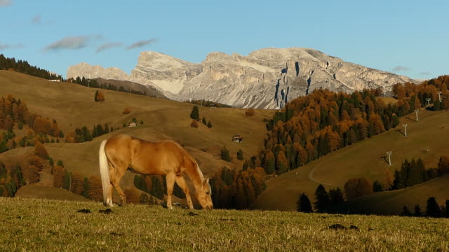 horse eating grass in meadow, italy - seiser alm stock videos & royalty-free footage