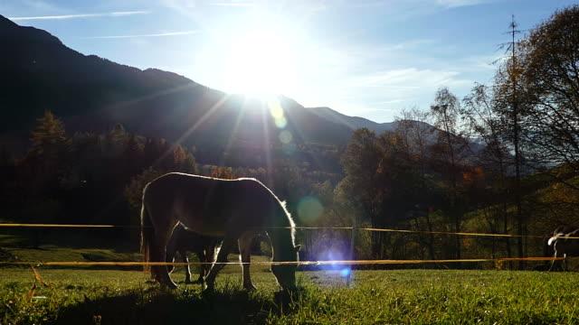草原で草を食べる馬 - cattle点の映像素材/bロール