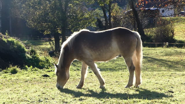 horse eating grass in meadow - hay stock videos and b-roll footage