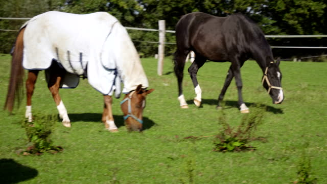 horse eating grass on a paddock - animal markings stock videos & royalty-free footage