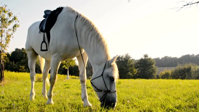 SLO MO Horse eating grass on pasture