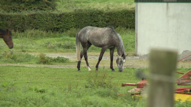 a horse eating grass - hoof stock videos & royalty-free footage