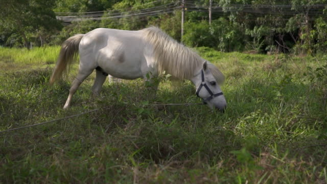 horse eating grass - retina stock videos and b-roll footage