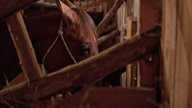 slo mo ld horse eating in his stall - animal markings stock videos & royalty-free footage