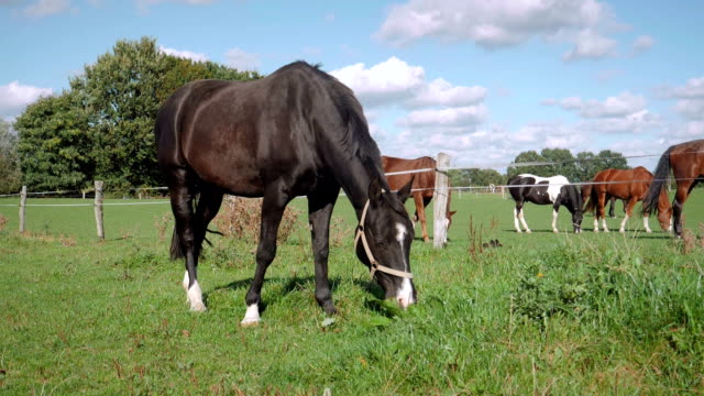 horse eating in slow motion - animal markings stock videos & royalty-free footage