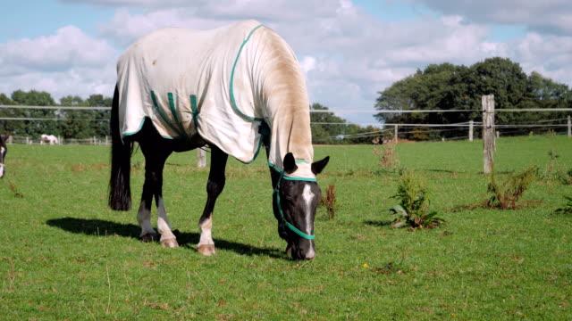 stockvideo's en b-roll-footage met horse eating in slow motion - vachtpatroon