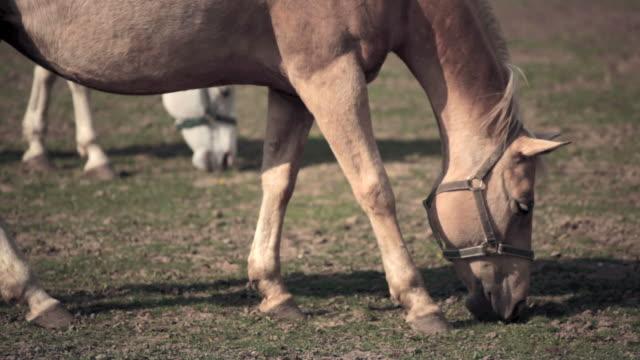 馬のお食事 - 馬勒点の映像素材/bロール