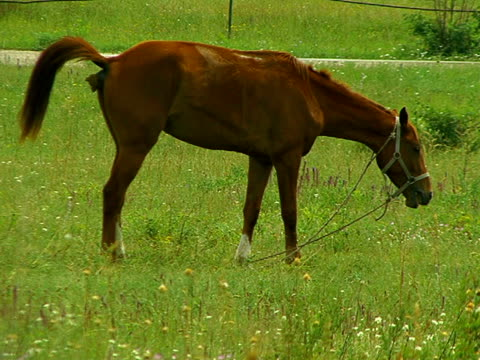 horse eats and defecates - mammal stock videos & royalty-free footage